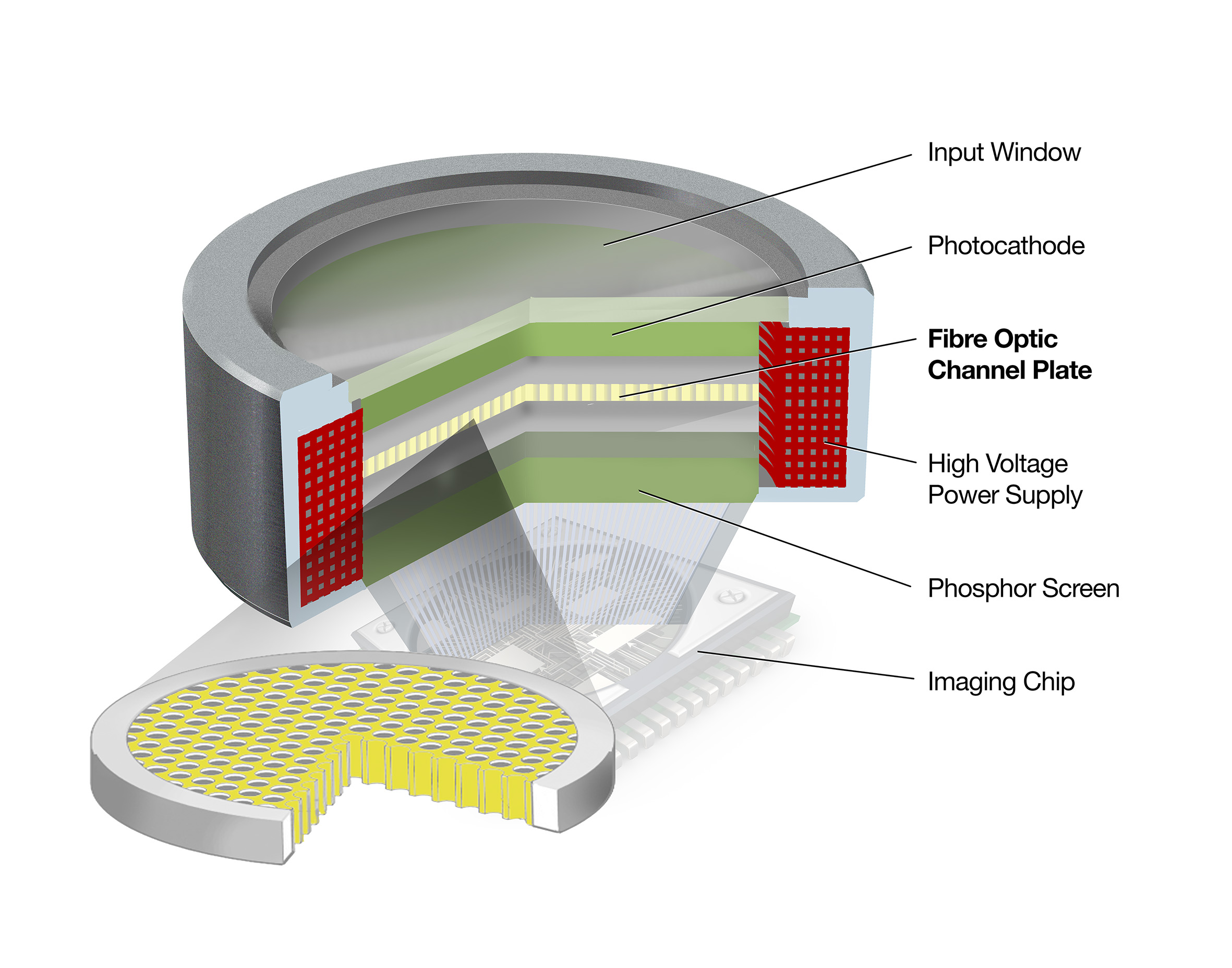 Schematic of a device using an FOCP to couple light onto an image sensor